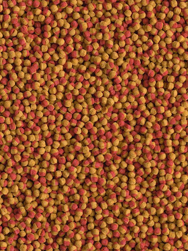 Tetra cichlid colour 500 ml