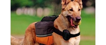 Dog Scout