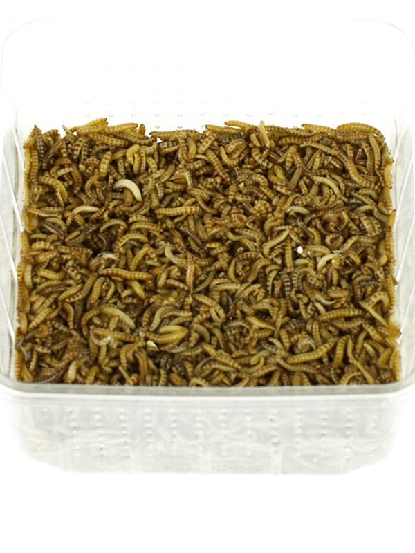 Meelwormen +/- 100gr