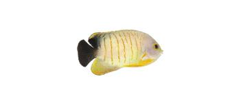 VANHAMEL dierenspeciaalzaak - Vissen & Vijvers