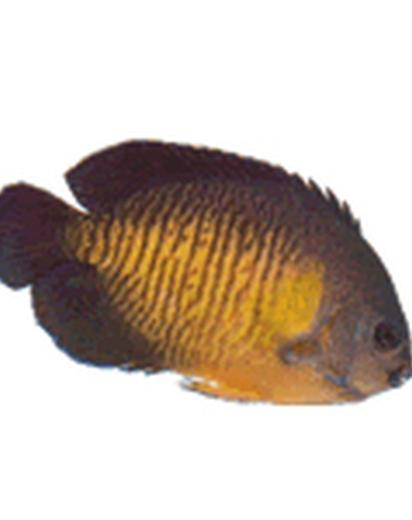 Vanhamel  - Vissen & vijvers